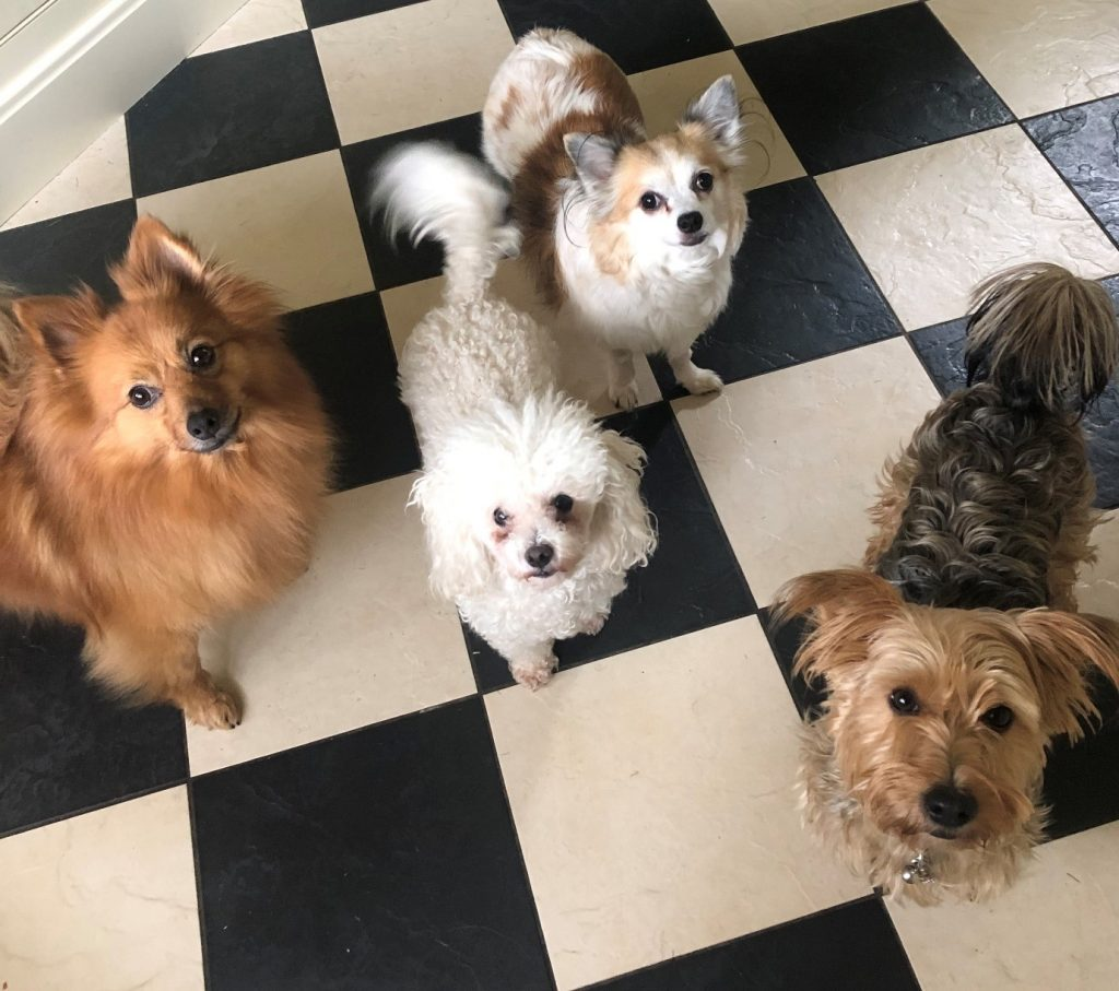 Phil Allen's dogs